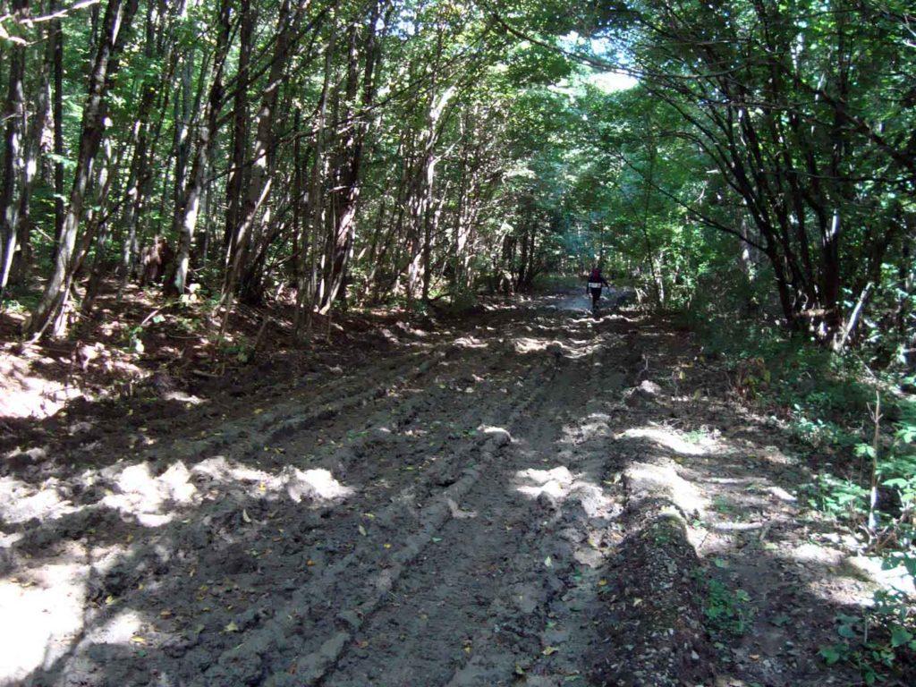 Дорога на Фанагорийское