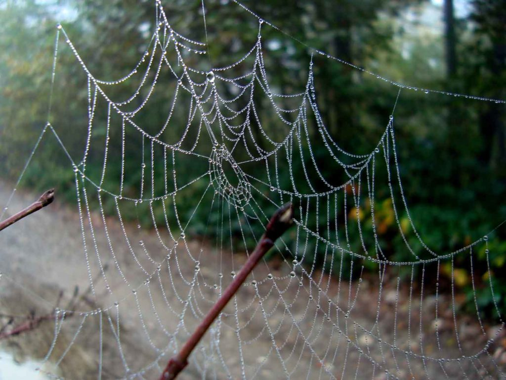 Симпатичная паутинка