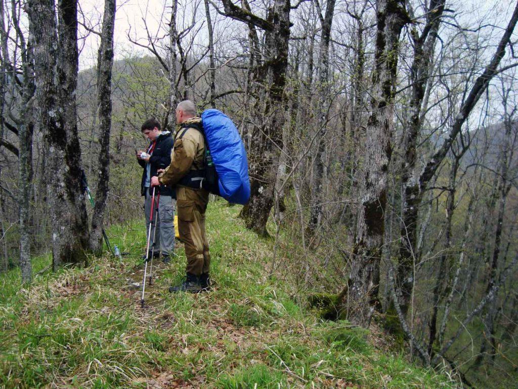 Лес по пути к Почепсухе