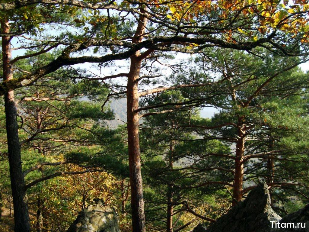 Деревья по пути