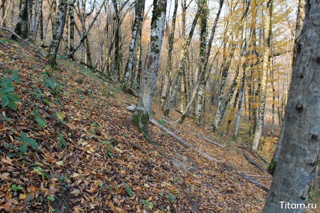 Тропа к Бешенке по лесу