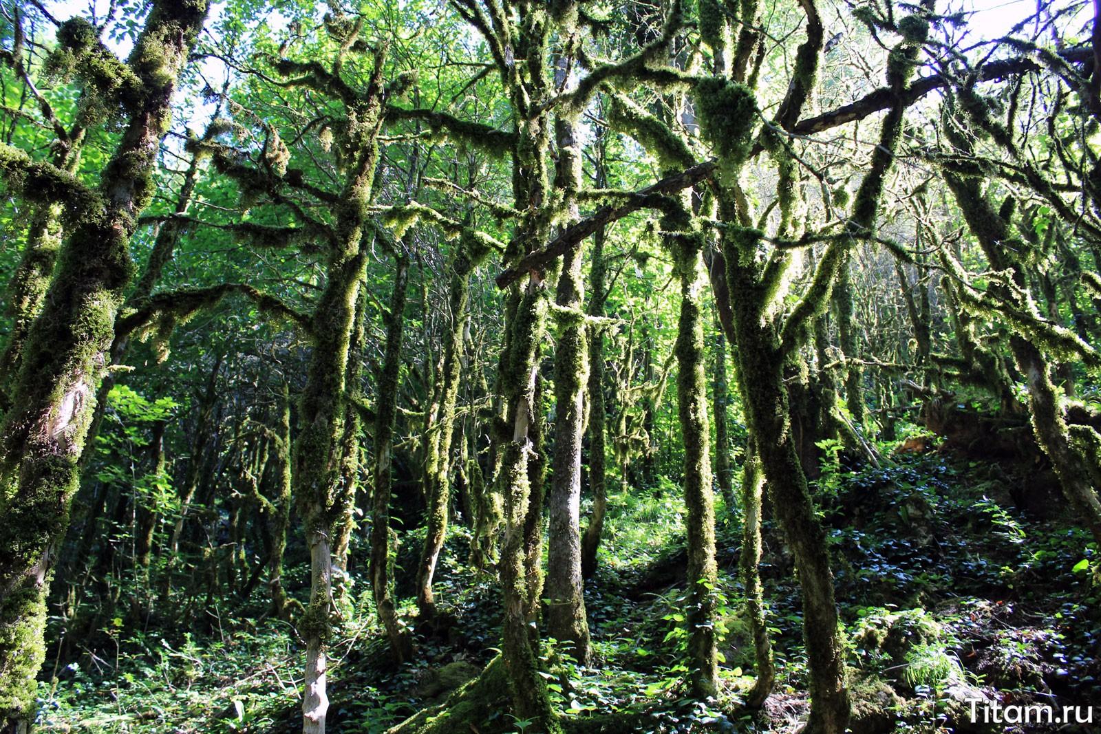 Сказочный лес Мезмая