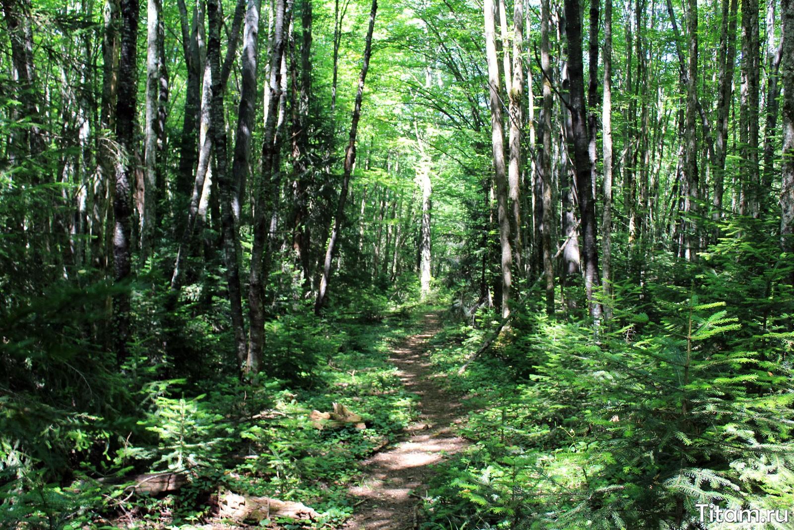 Мезмайский лес
