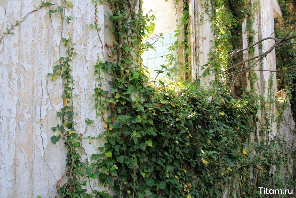Поросшие плющем стены