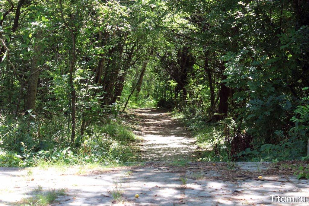 Тропинки в лес
