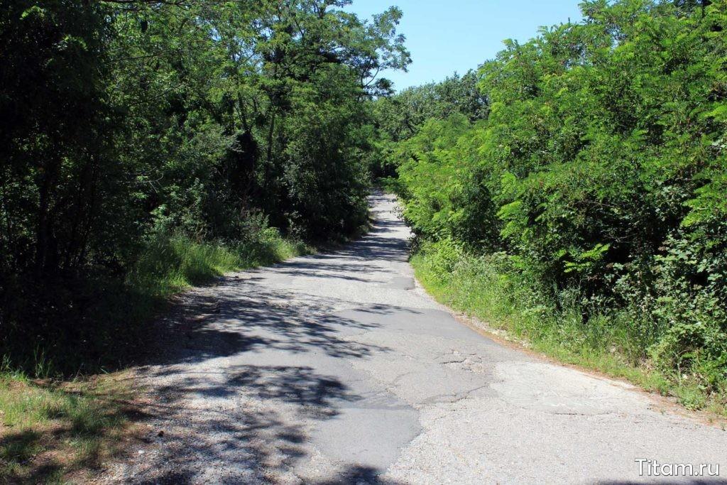 Дорога к даче Суворина в Ольгинке