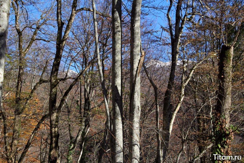 Вершины Семиглавой сквозь деревья