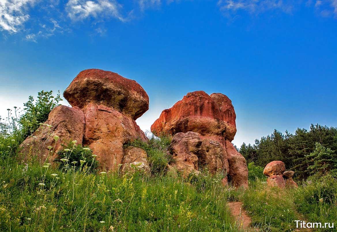 Красные каменные грибы