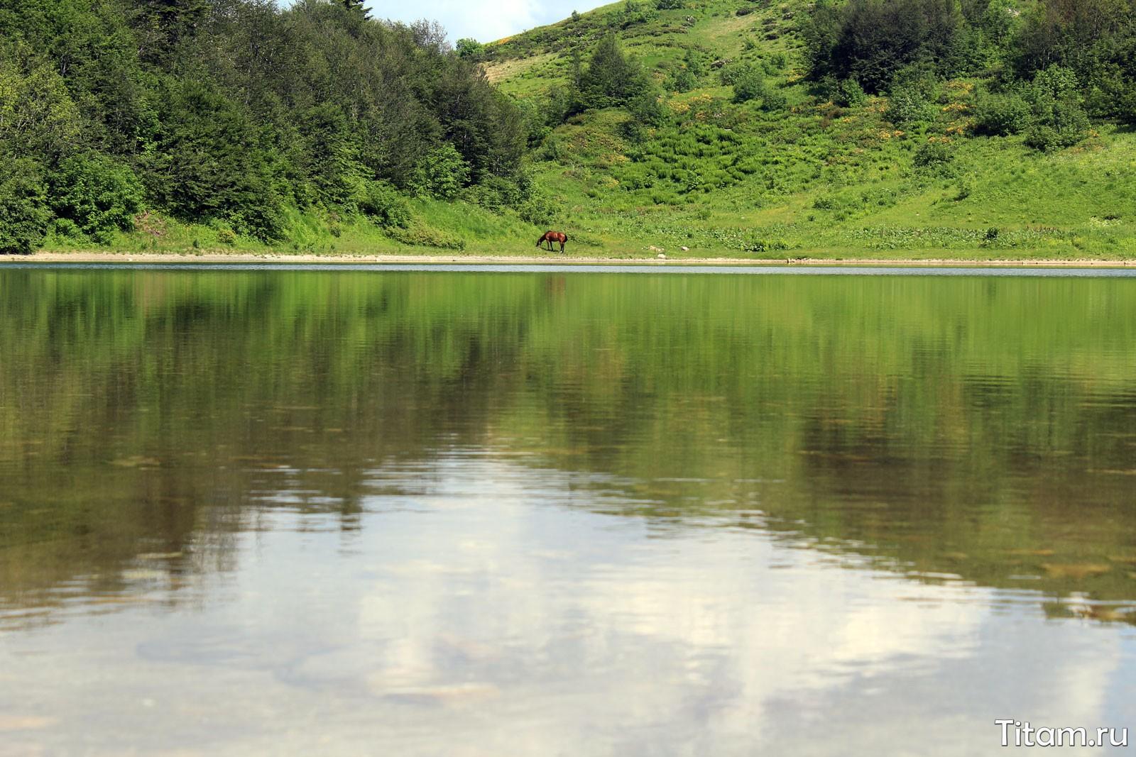 Лошадь на озере Хуко