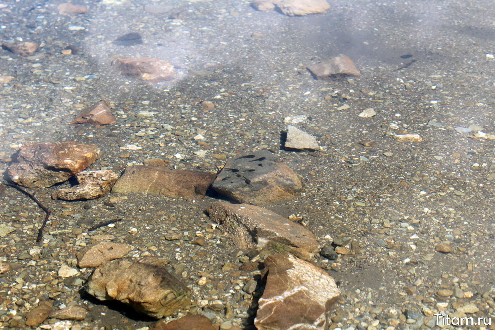 Головастики озера Хуко