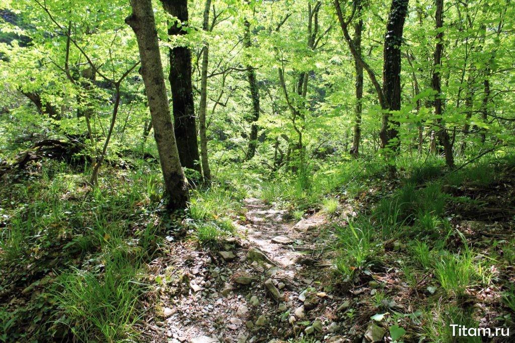 Тропа в лес
