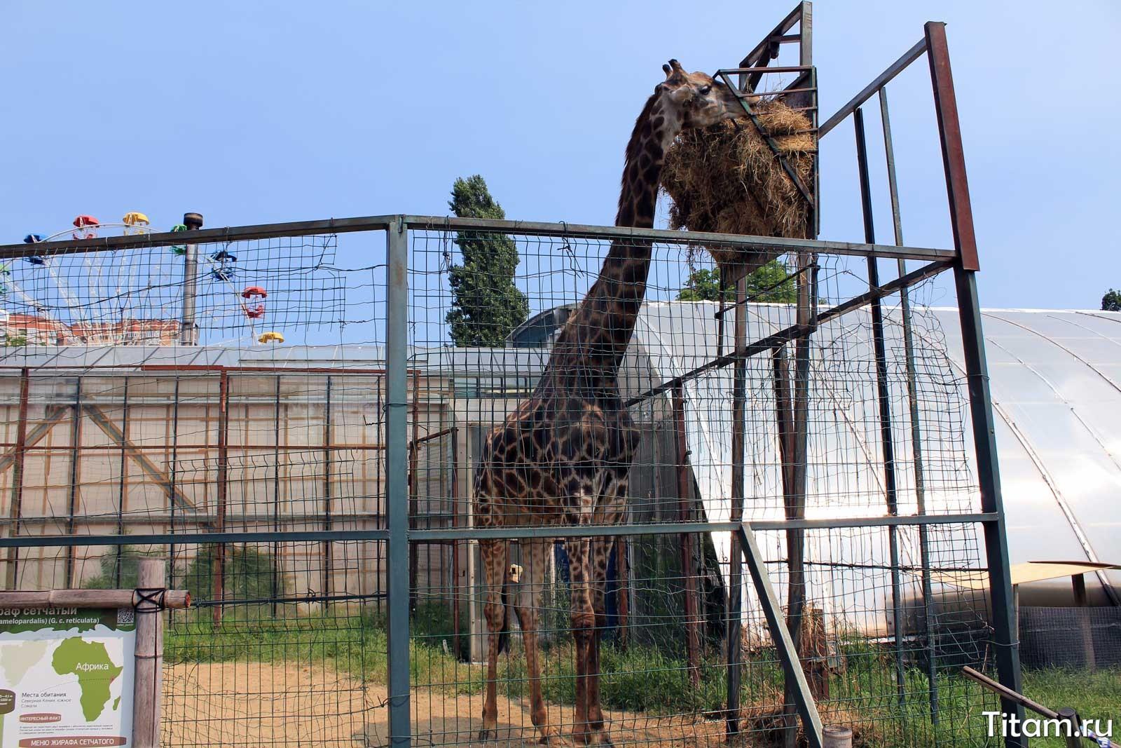 Жираф. Сафари-парк Краснодар