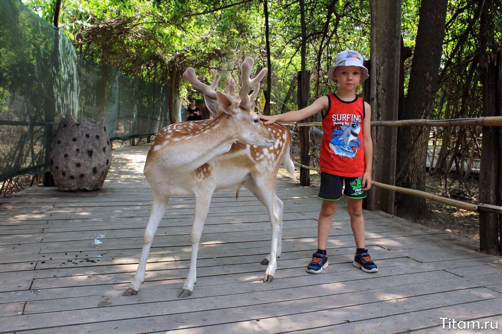 Оленёнок. Сафари-парк Краснодар